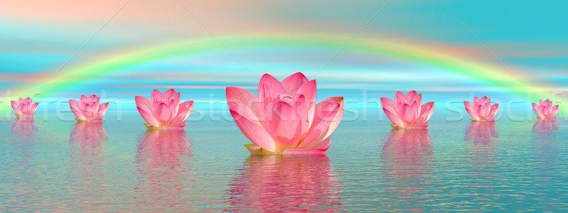 Lírio flores arco-íris rosa água belo Foto stock © Elenarts