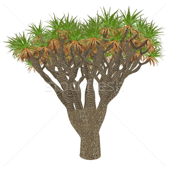 Canary Islands dragon tree or drago, dracaena draco - 3D render Stock photo © Elenarts