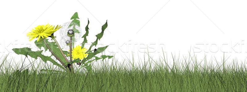 Leão 3d render grama isolado branco primavera Foto stock © Elenarts