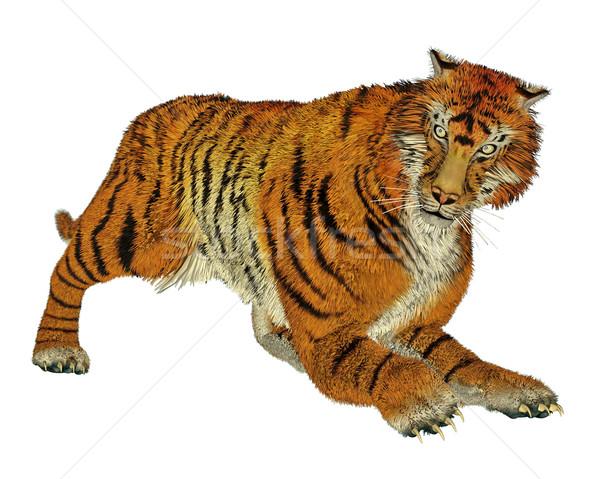 Tiger hunting Stock photo © Elenarts
