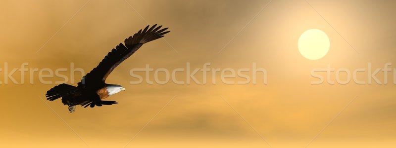 Stockfoto: Adelaar · zonsondergang · 3d · render · vliegen · zon · bewolkt