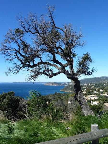 Görbület fa kilátás dél Franciaország tenger Stock fotó © Elenarts