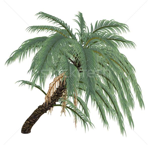 Wild or Senegal date palm tree, phoenix reclinata - 3D render Stock photo © Elenarts