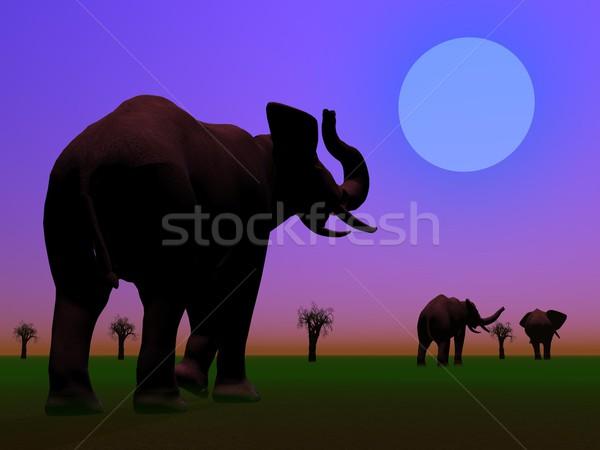 Elephants in the savannah by night Stock photo © Elenarts