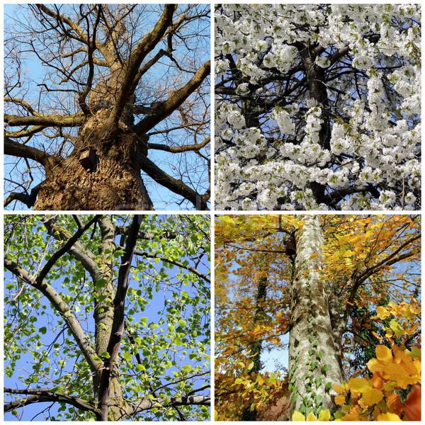 Szett négy évszak fák négy fa természet Stock fotó © Elenarts