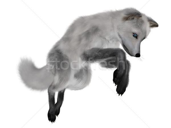 Blanche Fox chasse rendu 3d isolé fond Photo stock © Elenarts