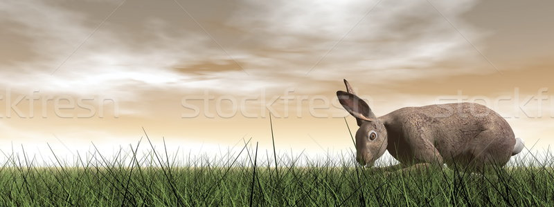 Quiet hare - 3D render Stock photo © Elenarts