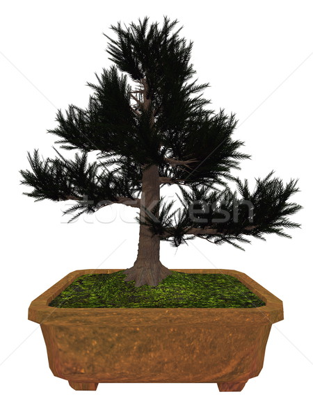 Japenese cedar tree bonsai - 3D render Stock photo © Elenarts