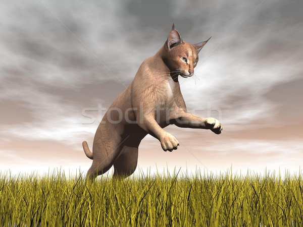 Caracal hunting - 3D render Stock photo © Elenarts