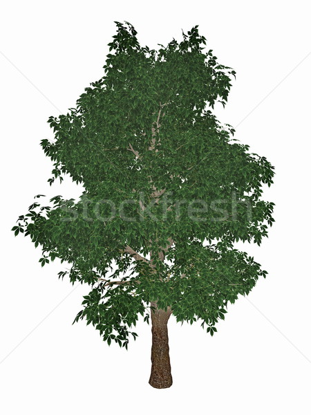 Horse-chestnut or conker tree, aesculus hippocastanum - 3D render Stock photo © Elenarts
