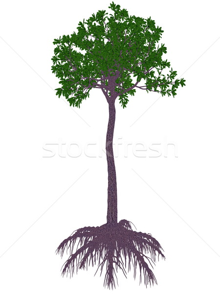 Glossopteris prehistoric tree - 3D render Stock photo © Elenarts