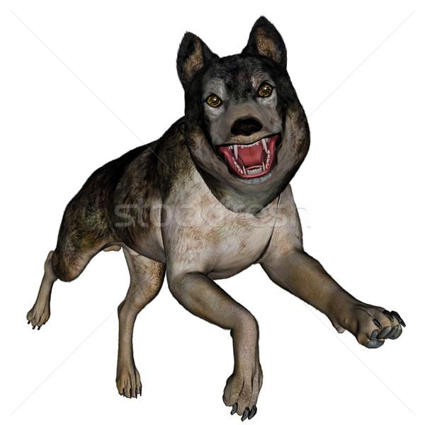 Lobo ejecutando 3d aislado blanco perro Foto stock © Elenarts