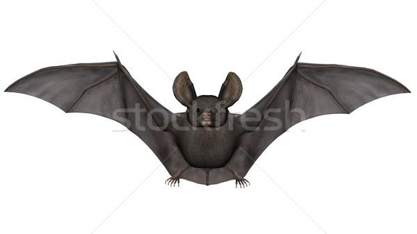 Flying Bat 3d визуализации изолированный белый природы Сток-фото © Elenarts