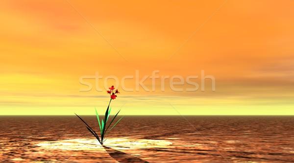 Vittoria vita piccolo rosso fiore foglie verdi Foto d'archivio © Elenarts
