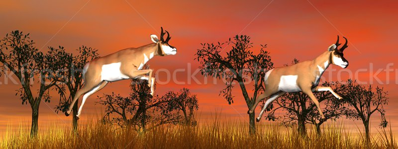 Two pronghorn antelope jumping Stock photo © Elenarts