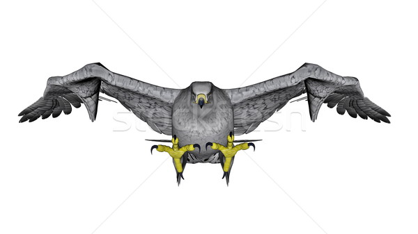 Branco falcão voador 3d render isolado natureza Foto stock © Elenarts