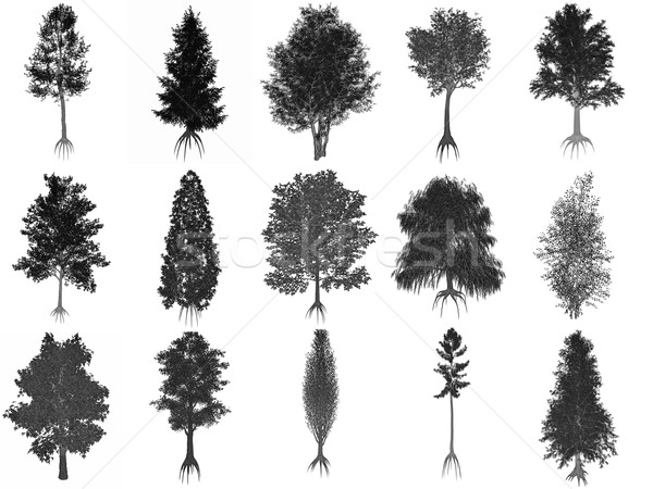 Stock photo: Set or collection of common trees, black silhouettes - 3D render