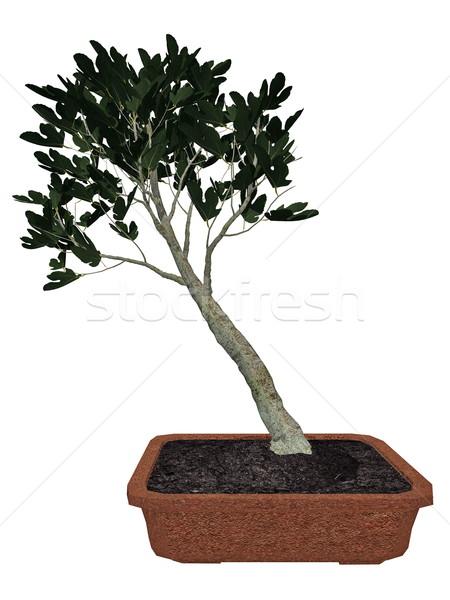 Füge fa bonsai 3d render izolált fehér Stock fotó © Elenarts