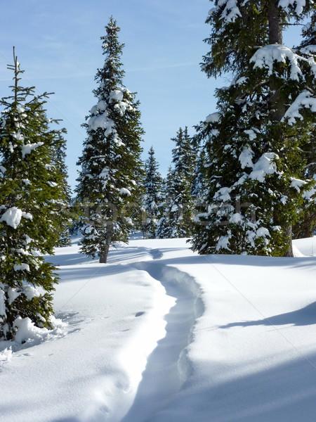 Fenyő fák tél ösvény föld gyönyörű Stock fotó © Elenarts
