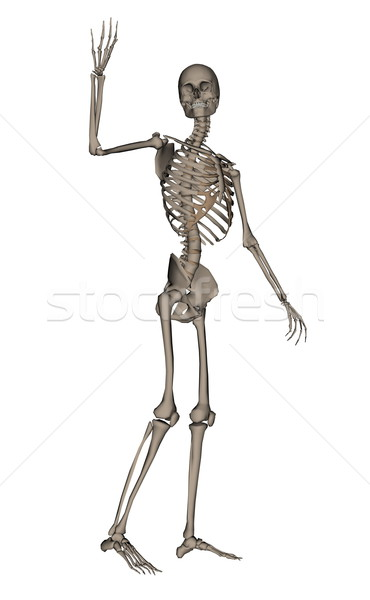 Human skeleton saying goodbye - 3D render Stock photo © Elenarts