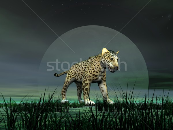 Panther by moonlight Stock photo © Elenarts