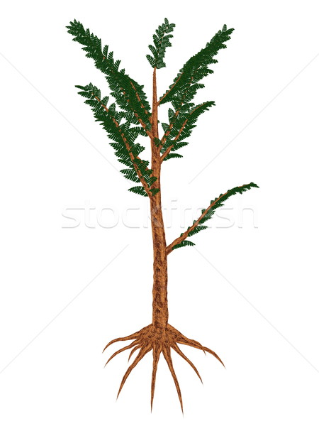 Pachypteris prehistoric plant - 3D render Stock photo © Elenarts