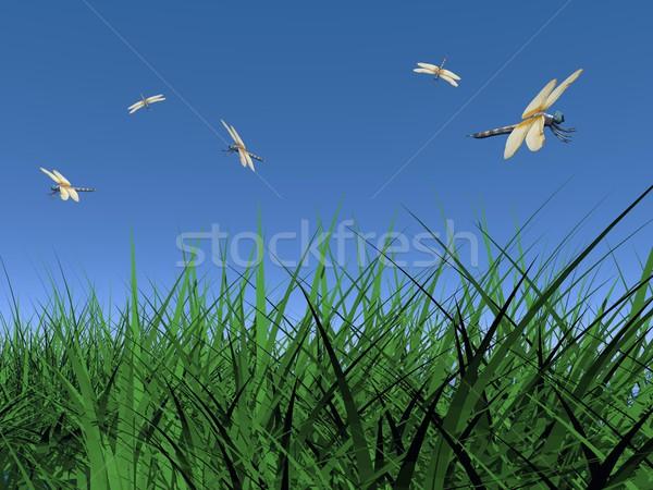 Danse plusieurs battant herbe verte belle bleu Photo stock © Elenarts