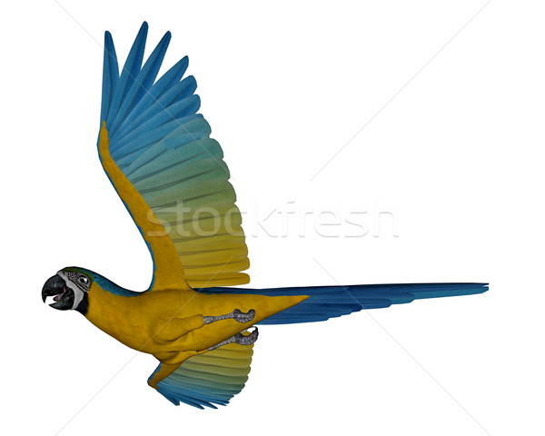 Blue and yellow macaw, parrot, flying - 3D render Stock photo © Elenarts