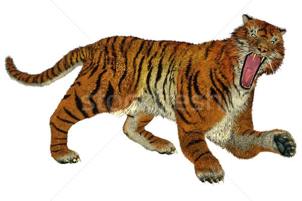 Tiger raging Stock photo © Elenarts