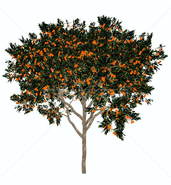 Sweet orange tree - 3D render Stock photo © Elenarts