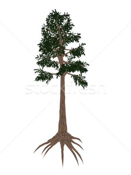 Archaeopteris prehistoric tree - 3D render Stock photo © Elenarts