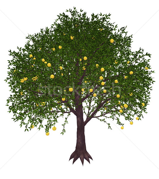 Grapefruit tree - 3D render Stock photo © Elenarts