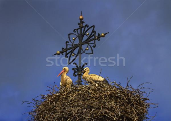 Two european white storks, ciconia, in the nest Stock photo © Elenarts