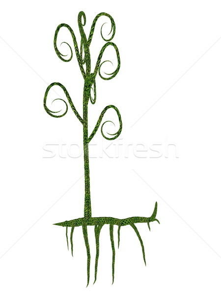Asteroxylon mackiei prehistoric plant - 3D render Stock photo © Elenarts