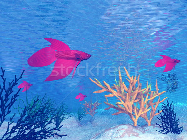 Red betta fishes - 3D render Stock photo © Elenarts