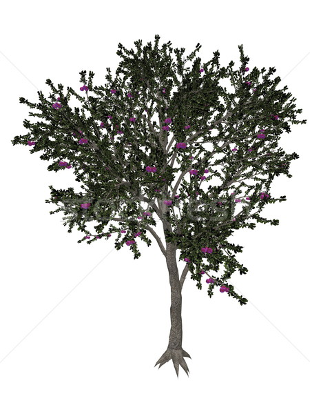 Blackthorn or sloe tree - 3D render Stock photo © Elenarts