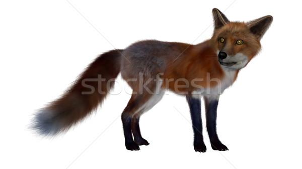 Rojo Fox pie 3d aislado blanco Foto stock © Elenarts
