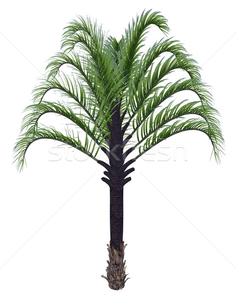 Triângulo palmeira 3d render isolado branco folha Foto stock © Elenarts