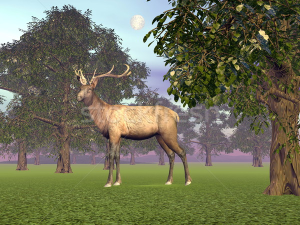 Elk in the woods - 3D render Stock photo © Elenarts