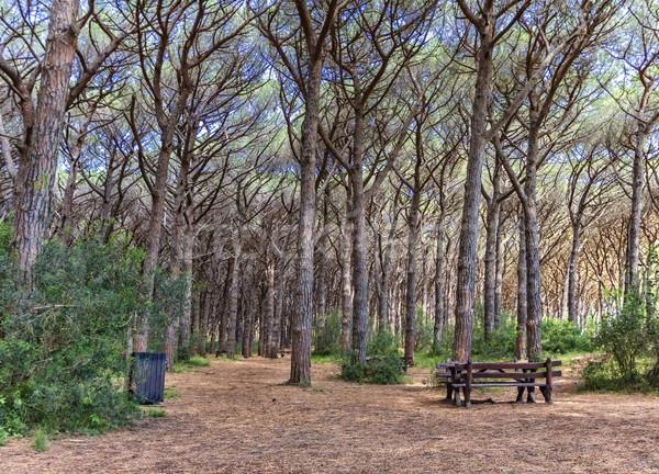 Forestales Toscana Italia banco madera paisaje Foto stock © Elenarts