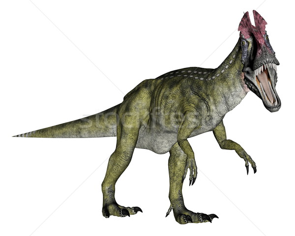 Cryolophosaurus dinosaur walking - 3D render Stock photo © Elenarts