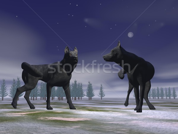 Wolves by night - 3D render Stock photo © Elenarts
