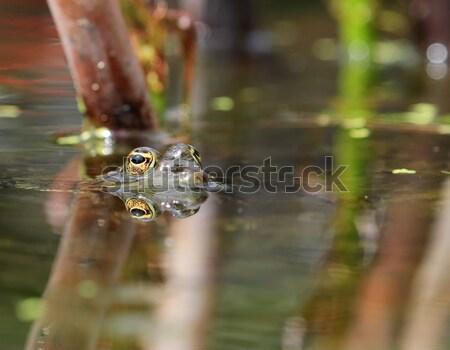 Frog eye Stock photo © Elenarts