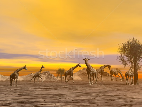 Giraffes in the savannah - 3D render Stock photo © Elenarts