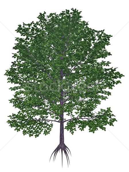 édes fekete mahagóni fűszer cseresznye nyírfa Stock fotó © Elenarts