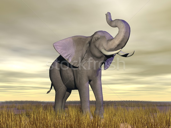 象 サバンナ アップ 立って 曇った 日 ストックフォト © Elenarts