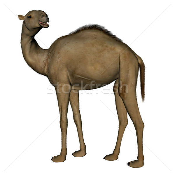 Stock photo: Camel standing - 3D render