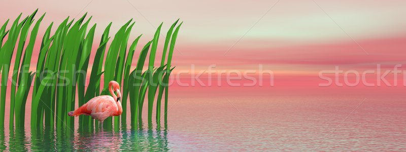 Flamingo and waterplants by sunset Stock photo © Elenarts