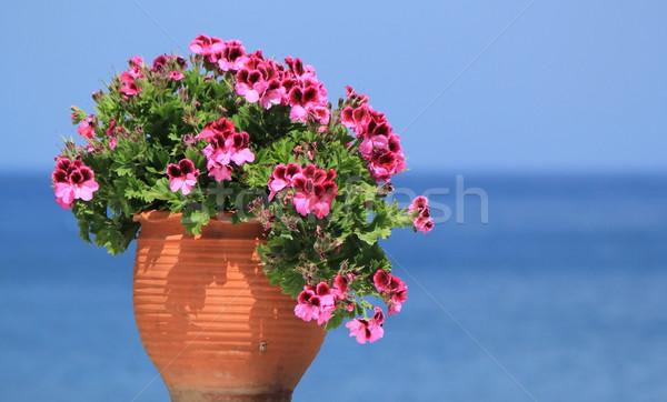 Geranium flowers in front of the sea Stock photo © Elenarts