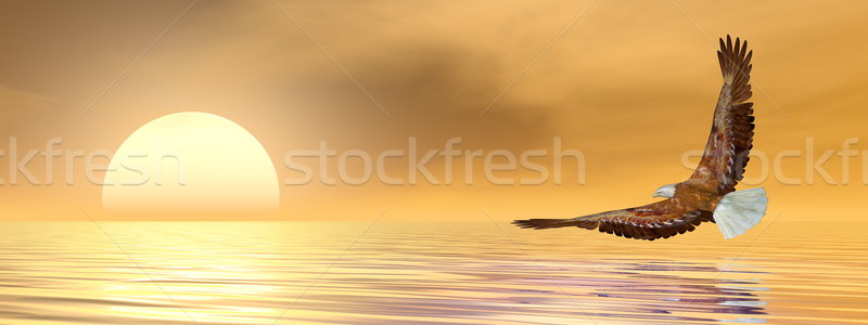 Eagle flying to the sun - 3D render Stock photo © Elenarts